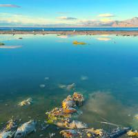Photo: Roxanne Varzi, Salton Sea, California