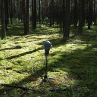 Elisabeth Schimana | Weites Land - Episode 2 Waldrauschen | Foto: Elisabeth Schimana